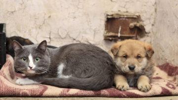 Salvando Patitas: iniciativa ucabista para los animales