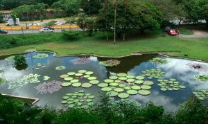 botanico-web
