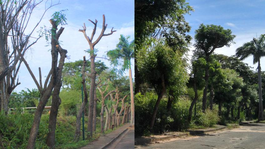 Poda fitosanitaria resulta exitosa en el campus de la UCAB Guayana