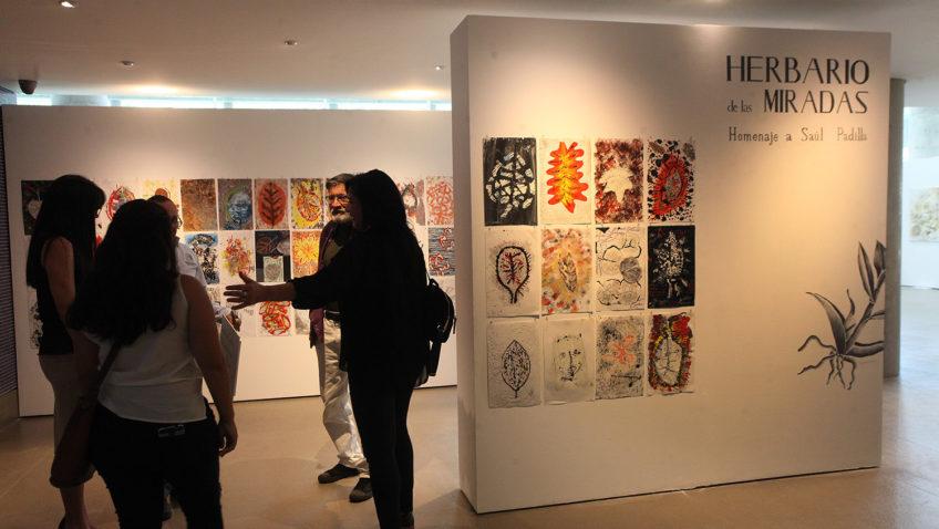 Arte y naturaleza se mezclan en la exposición «Herbario de miradas» del Centro Cultural UCAB