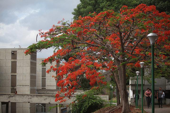 La UCAB convoca jornada de reflexión teológico-pastoral para construir salidas democráticas a la crisis