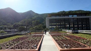 Técnicos refuerzan labores de conservación del Techo Verde de la UCAB