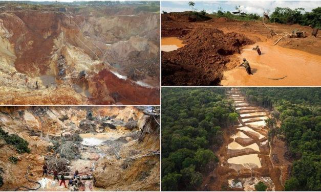 Seis datos que hay que saber sobre la situación de los bosques y el agua en Venezuela